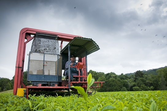 Madura Tea Estates, based in Murwillumbah, blend and package more than 24 tea styles. Try their brew.