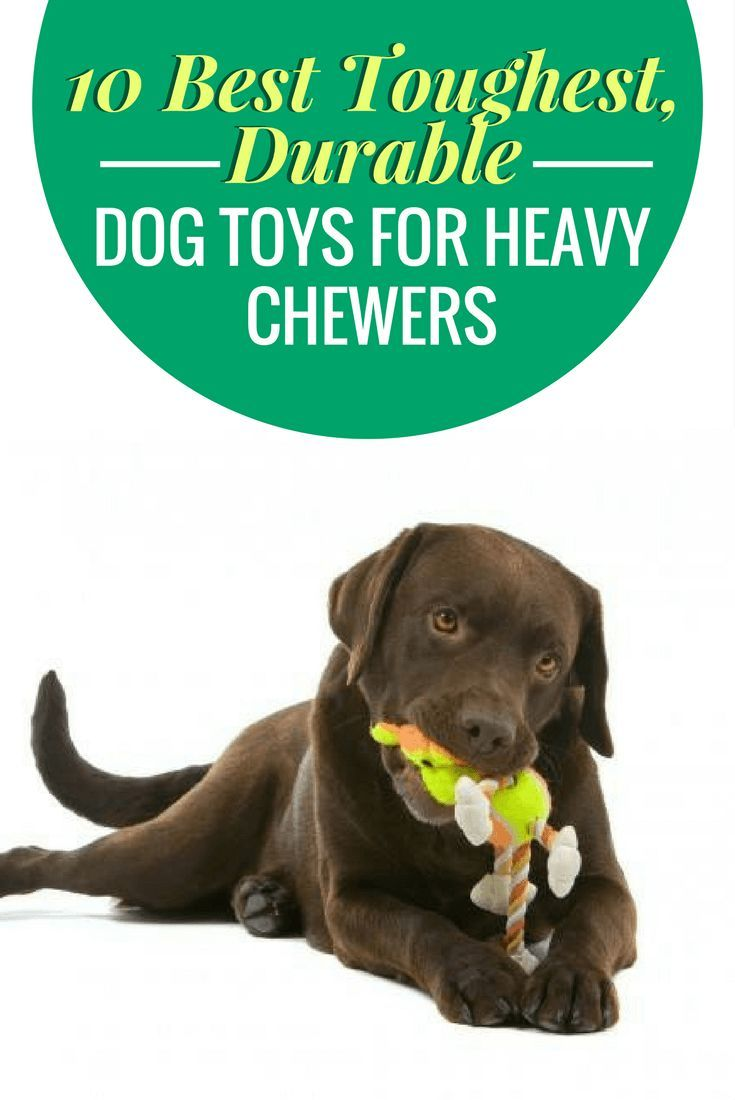 10 Best Toughest Durable Dog Toys For Heavy Chewers Durable Dog