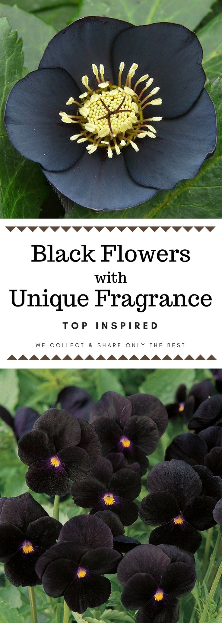 Take a look at these 10 black plants and flowers we have chosen as most suitable for adding a dark touch to your garden and choose your favorites.