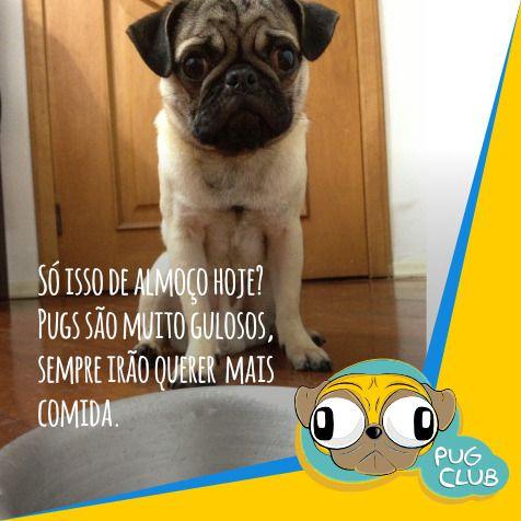 Só isso de almoço hoje? Pugs são muito gulosos, sempre irão querer mais comida.  #pugclub #puglife #pug #puglove #clubpug #pugclubinternacional #pugs #pugsrequest #pugstuff #pugsrock #pugsofinstagran #pugsloversclub #pugsforinstagram #pugstgram #pugsnotdrugs #pugstar #pugsofinsta #pugswag #pugstagram #pugsmile #pugshot #pugslover #pugselfie #pugsessed #pugso…