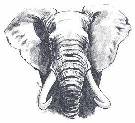 elephant face drawing - photo #17