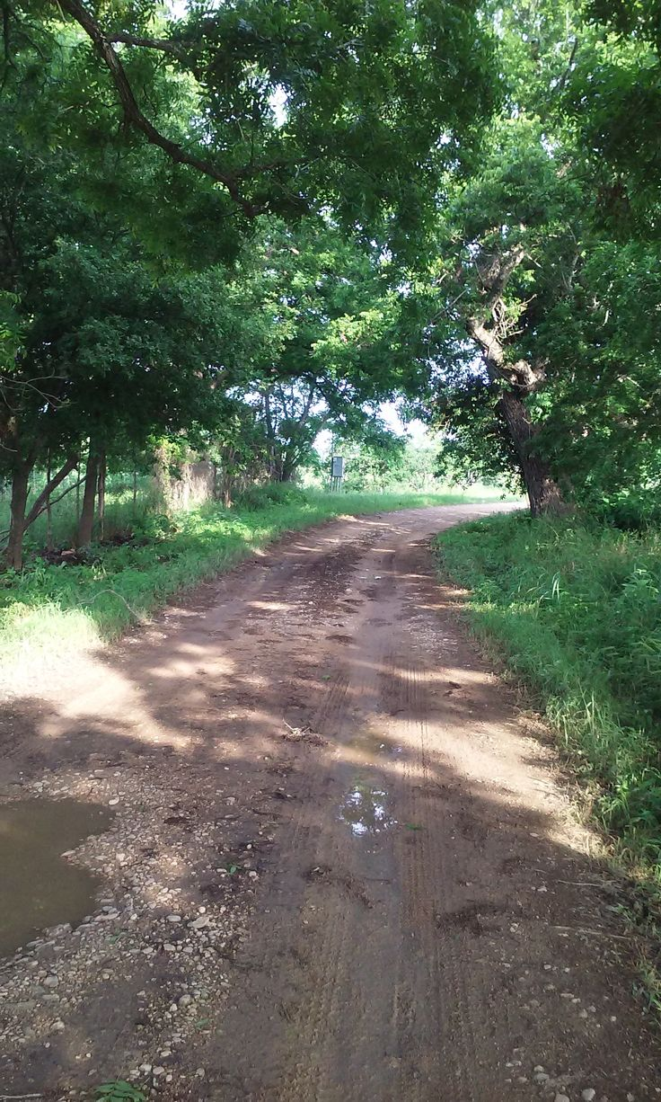 Muddy road; it had been raining here. The following morning, I awoke to the light pitter-patter of rain upon the roof of the cottage. It was still dark outside. I put on an emergency poncho and headed out to my destination, along a labyrinthine, narrow ro