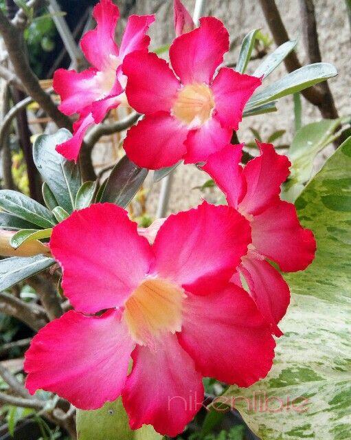 #PicsArt #flower