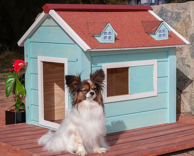 'Yes, I'm houseproud!' - Phoebe sits on the deck of her RitzPetz dog house