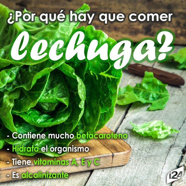 La lechuga te ofrece muchísimas bondades, aprovéchalas al máximo #Verduras #Vegetales #Food #Saludable