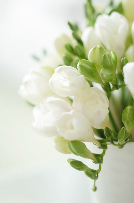 Vintage Gathering Wedding Flowers: Freesia- one of my personal favourites, beautiful, smells divine and so elegant- available from January onwards