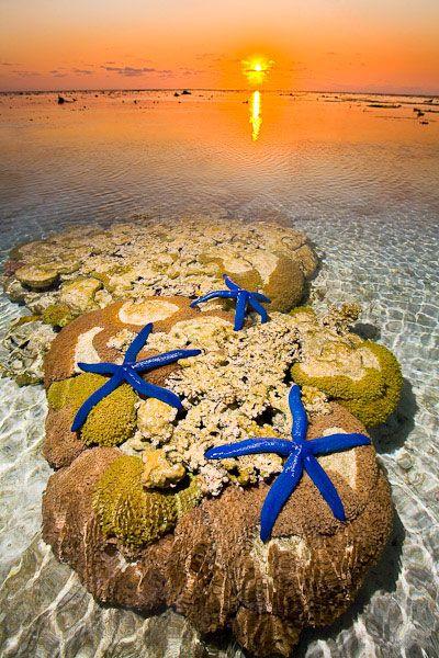 ✯ Starfish on the Beach - Lady Elliot Island - Great Barrier Reef༺♥༻神*Ŧƶᶮ*神༺♥༻