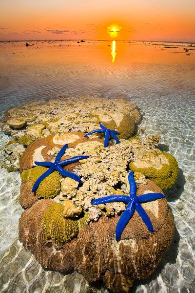 STARFISH ON REEF at Lady Elliot Island Eco Resort ~ southern tip Great Barrier reef, Australia, Photo by Darran Leal via World Photo Adventures.
