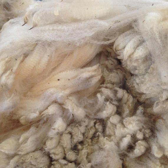 Merino cross Leicester Fleece Fine Raw Fleece