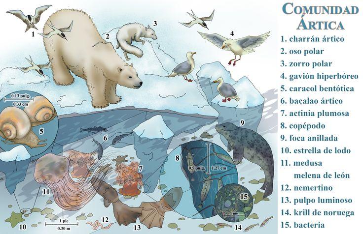 dieren op de Noordpool