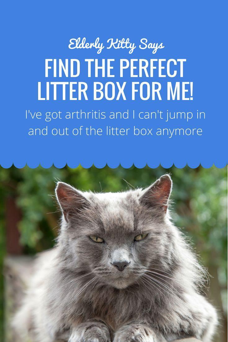 What Is The Best Litter Box For Elderly Cats? Senior cat