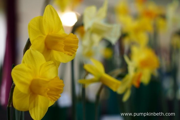 This year's Daffodil Society Mid Southern Group Spring Show fell on Easter Sunday - the perfect day to admire the many different varieties of daffodil.