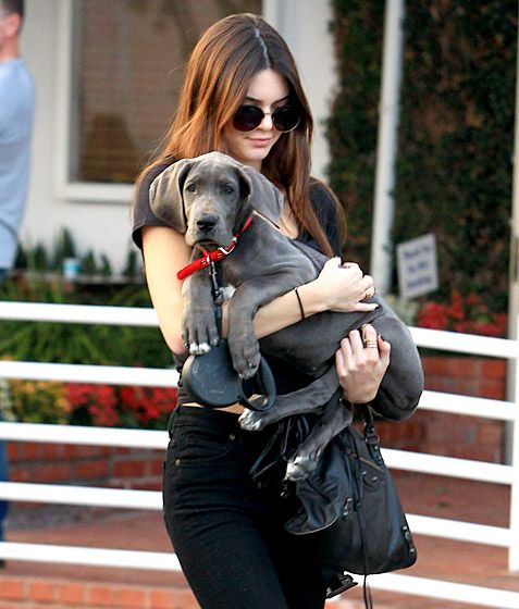 Kendall Jenner Kanye West may have given Kim Kardashian a huge ring, but Rob Kardashian gave his sister Kendall her adorable puppy Blue!   Read more: http://www.usmagazine.com/celebrity-news/pictures/celebs-with-their-pets-20131211/33869#ixzz2kiDWxkMU  Follow us: @Us Weekly on Twitter | usweekly on Facebook