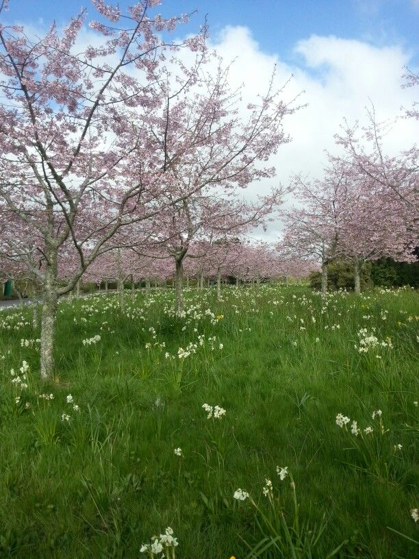Spring time in New Zealand
