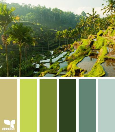VOICE VALUES COLOR PALETTE: Depth. The tonal grey-green-blues here provide the complicated counterpoint a high Depth value needs. See also: Clarity | rice field hues via Design-Seeds | commentary via The Voice Bureau at AbbyKerr.com
