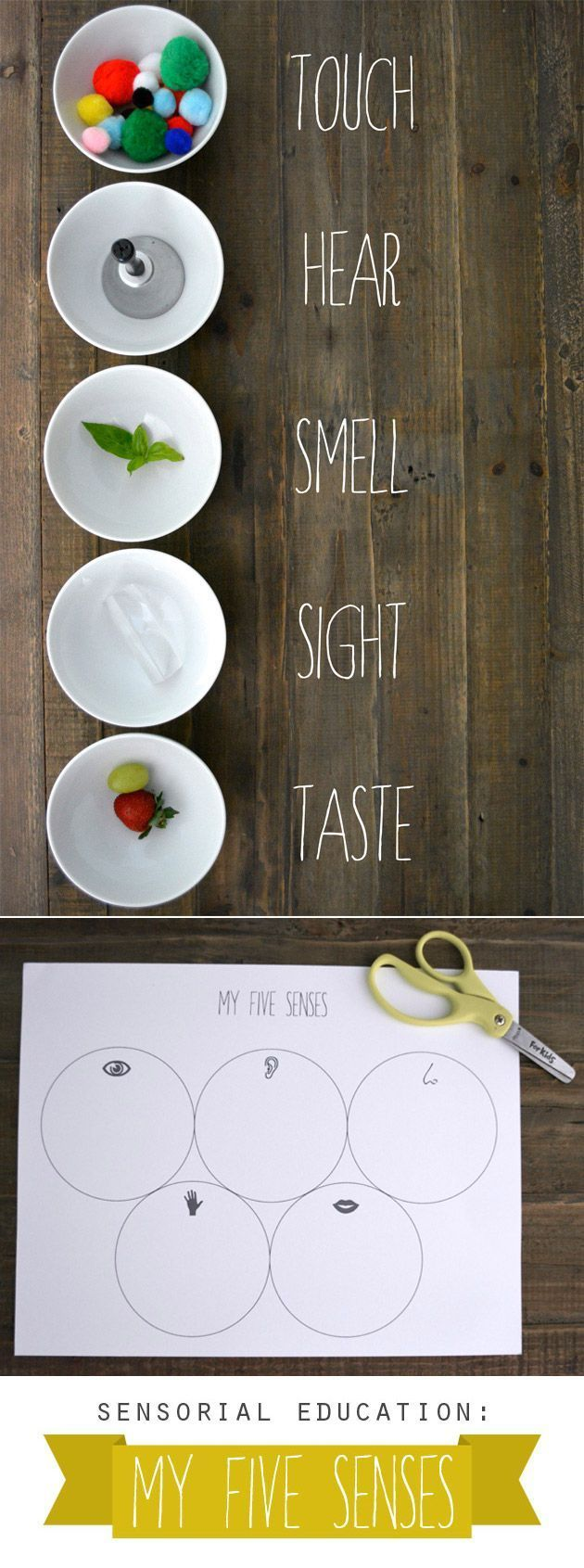 My Five Senses (+ printable)... Simply by being thoughtful about what children touch, hear, see, and smell during a learning experience, we can turn an ordinary lesson into lasting memory.