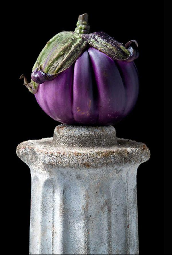 Italian Eggplant. © Lynn Karlin