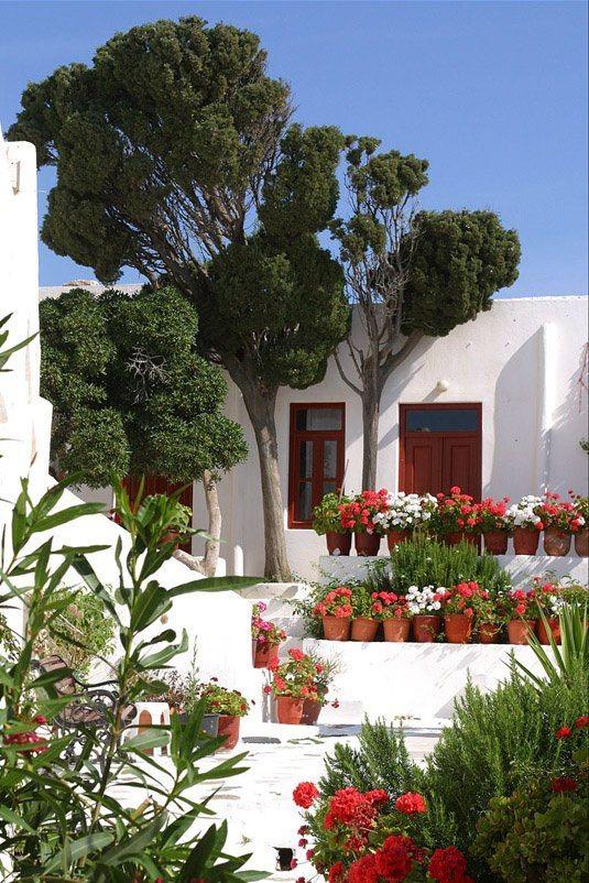 elladaa:  Γεράνια σεόλοτους τομεγαλείο♥  Geraniums ιn all their glory♥  Greece Art  Architecture