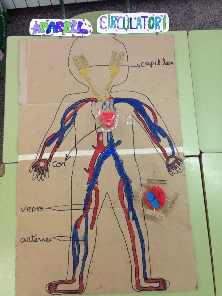 Aparell Circulatori Aparato Circulatorio Made for children's