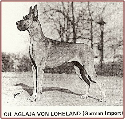 """Aglaja was imported by Rosemarie Roberts (Dinro) from Mrs. Von Rohden's von Loheland Kennels in Germany. One of Dinro's two foundation bitches. She was heavily inbred on the Saalburg line, particularly the famous Ch Dolf vd Saalburg. Her littermate """"CH Aslan von Loheland"""" went to Cairndania. He was an outstanding brindle and was several times a Best in Show winner."""