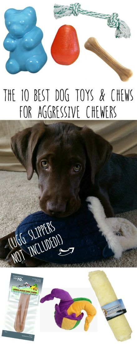 Does your dog destroy toys and eat chews before you can throw out the wrapper? Check out this list of my top 10 favorite dog chews for aggressive chewers!