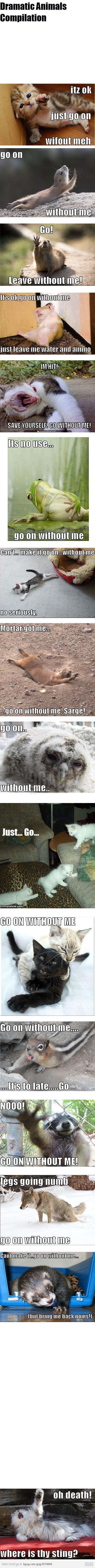 Dramatic animals funny