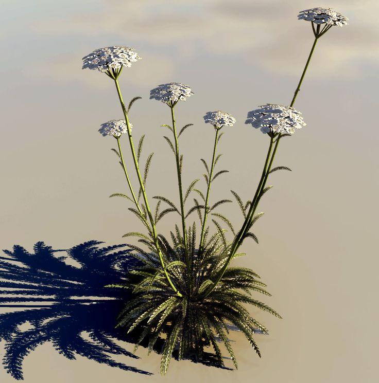 Achillea millefolium  http://www.thezealousthumb.com/lumenrt/achillea-millefolium