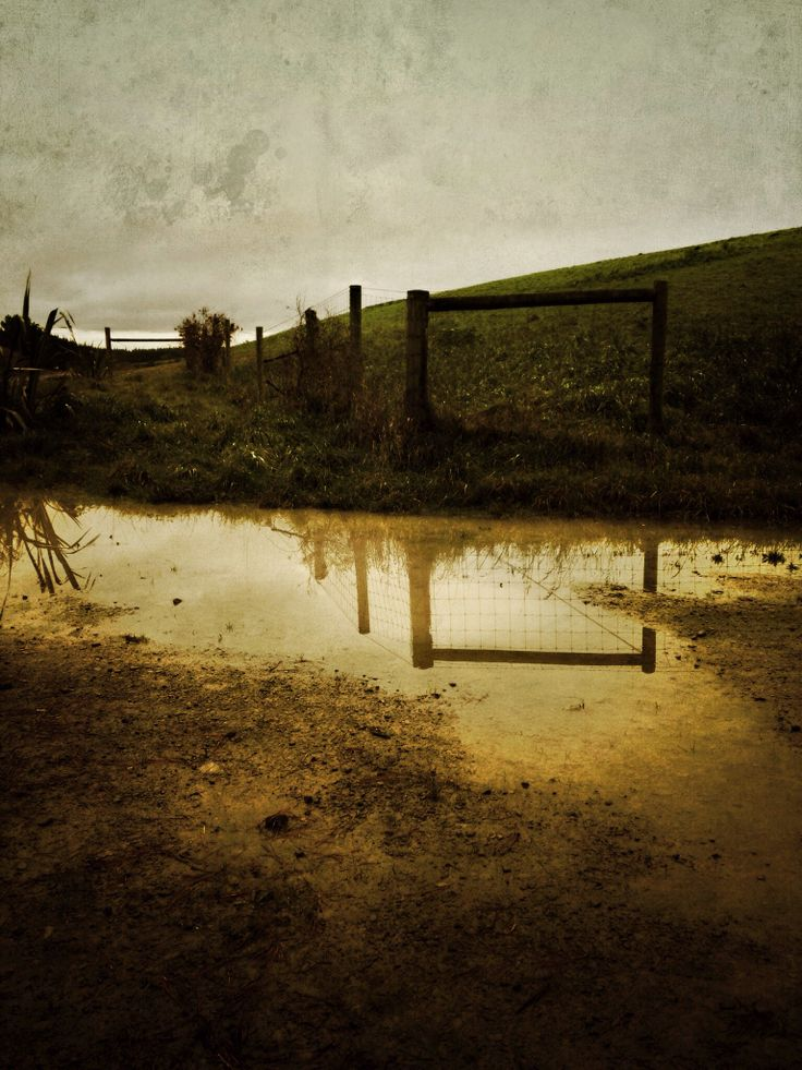 On my walk through the forest after the rains I came across this puddle...  #imagesbyShivonne #christchurch #NZ #water #puddle #autumn #reflections #fence