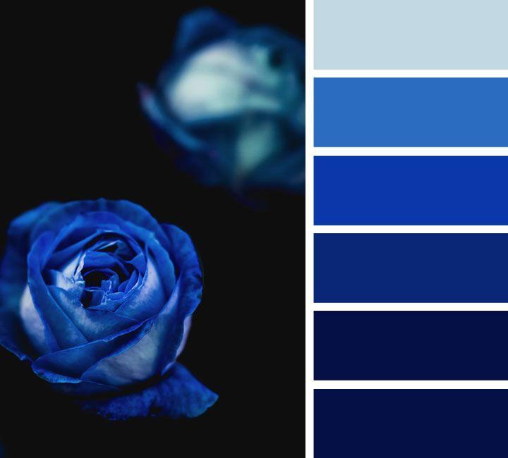 Midnight Blue And Royal Blue Color Scheme Blue Color
