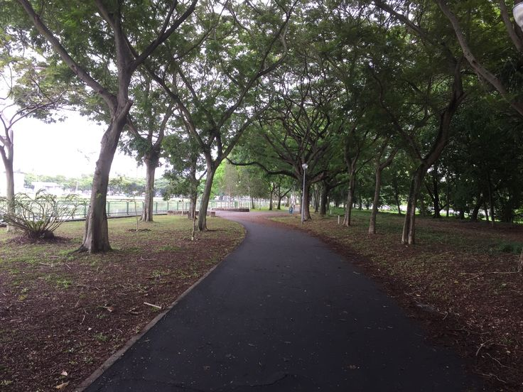 In the wood along Kallang River