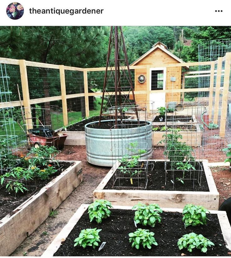 I love love @theantiquegardener raised bed garden and chicken coop.  I love the pecky cedar boards she used to make her raised beds.