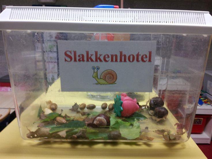 Slakken zoeken. Ze mogen een paar dagen logeren in het slakkenhotel!