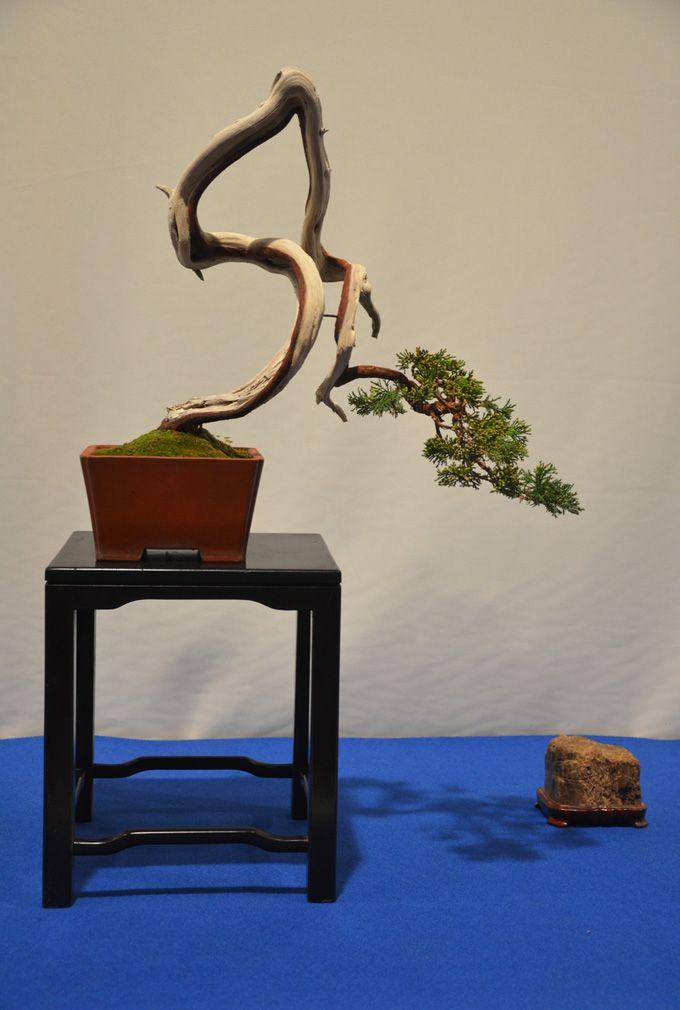 Bonsai saikei ikebana chojubai kokedama penjing for Literati bonsai gallery