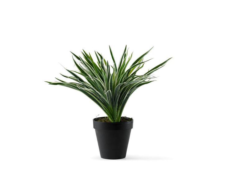 Les 25 Meilleures Id Es De La Cat Gorie Plantes Grasses Artificielles Sur Pinterest Plantes