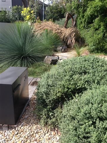 Nature's Vision Blog. Wamberal coastal residence. Front garden plantings consist of Coastal Rosemary, Coastal and Swamp Banksia, Queensland Bottle Tree, Casuarina Cousin it, Xanthorrhea glauca, Poa Suggan Buggan, NZ flax, Corokia Silver Ghost and Carex grasses planted amongst aged railway stepped sleepers, basalt boulders and terrazo steppers.