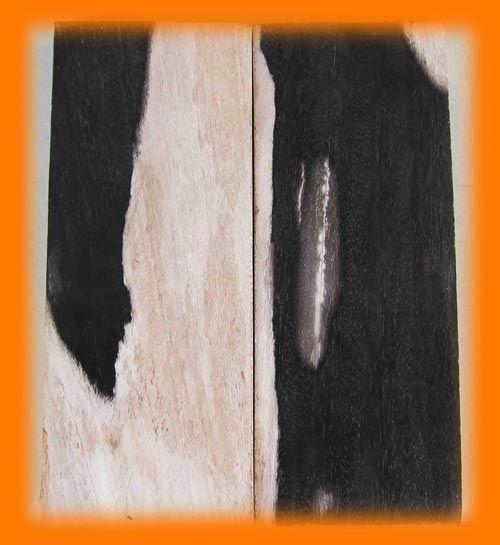 Petrified Wood Tiles for sale