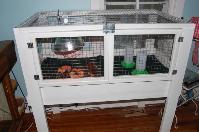 Next year's brooder? Needs a wire bottom and a removable tray under that (for cleaning).