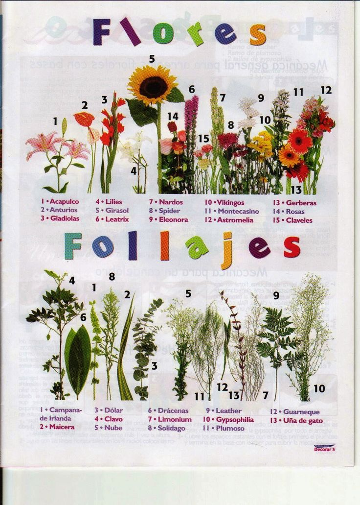 como hacer arreglos florales                                                                                                                                                                                 Más