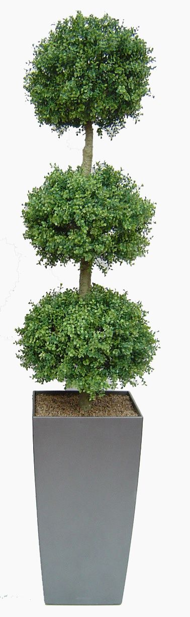 Triple Ball Topiary Tree In Large Gun Metal Grey Lechuza Planter. Buy From  Www.