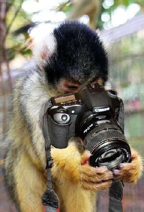 Risultato della ricerca immagini di Google per http://konaxo.altervista.org/wp-content/uploads/2010/07/Scimmia-con-macchina-fotografica-1.jpg