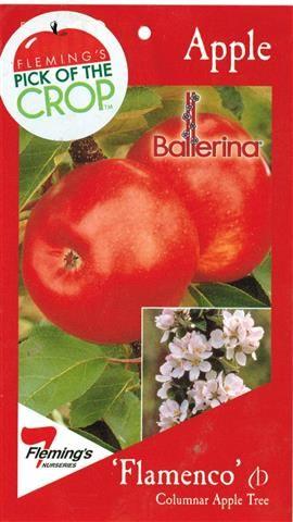 Apple Ballerina Flamenco