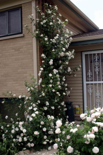 73 Best Images About Garage Wall Garden Idea On Pinterest