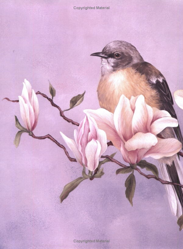 Painting Garden Birds with Sherry C. Nelson (Decorative Painting): Sherry Nelson: 9780891347712: Amazon.com: Books
