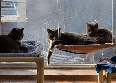 Animal Shelter Volunteer Life #adopt these lovely #cats #adoptdontshop