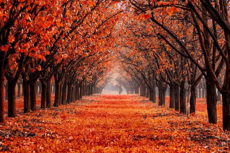 Jesienny sad i mgła. Ciekawy efekt, uzyskany dzięki filtrowi Indian Summer w pakiecie Google Nik Collection, Color Efex Pro.