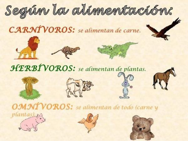 Clasificación De Los Animales Según Su Alimentación Resumen Co Clasificación De Animales Clasificacion De Seres Vivos Actividad De Clasificación De Animales
