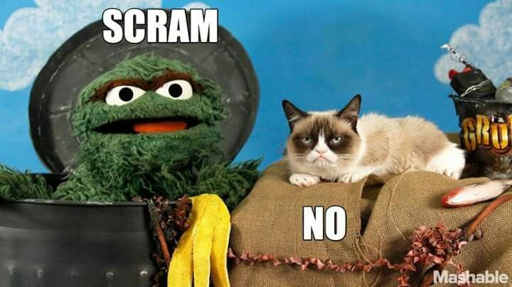 Search likewise Sesame Street Big Bird also Episode 0303 together with Elmo Do It For The Vine in addition Grumpy Cat Aka Tardar Sauce 3 Her. on grouch off sesame street meme