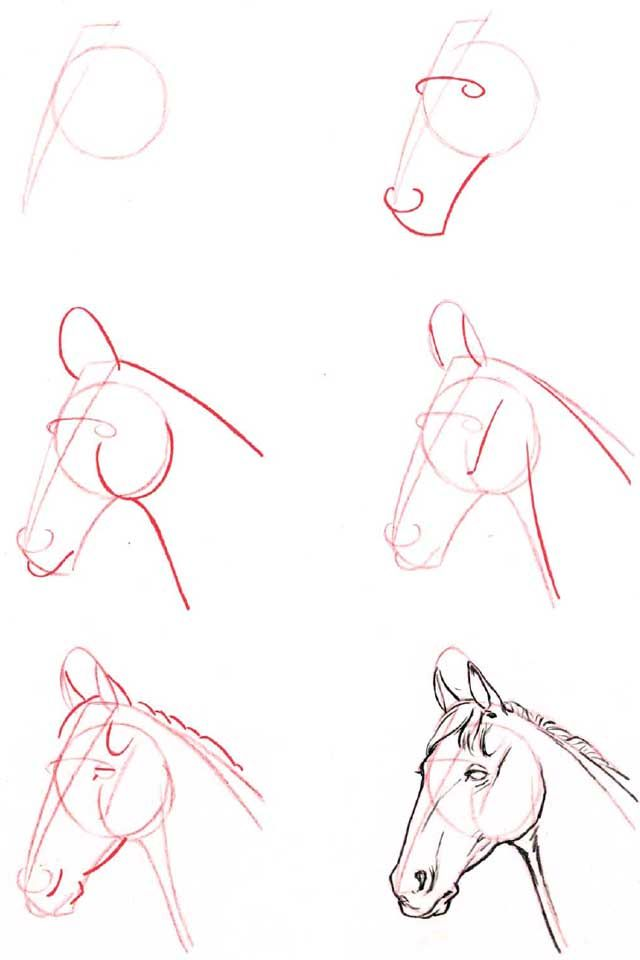 how to draw a horse's head