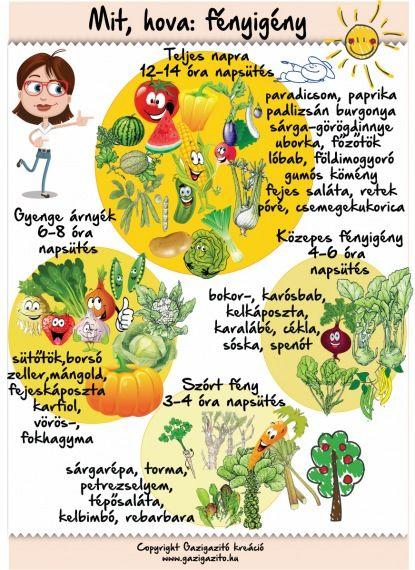 Gyümölcsök, zöldségek árnyékban - gazigazito.hu