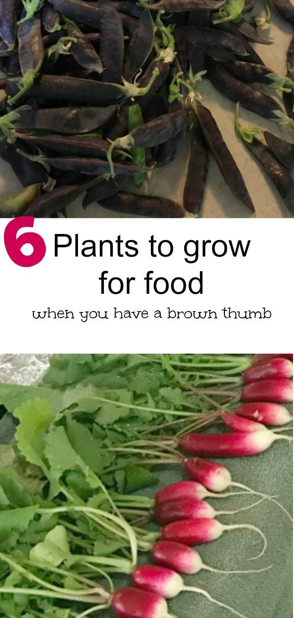 What To Grow If You Have A Brown Thumb Easy Vegetables To Grow